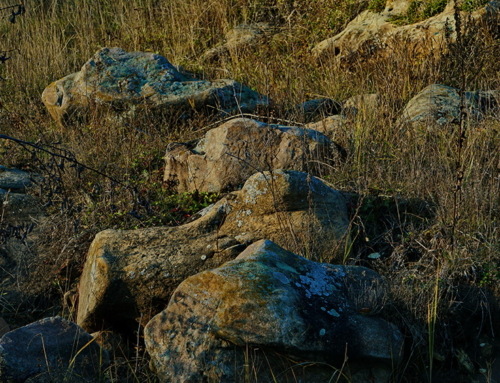 Лебедянская Карелия и языческое «Вертебище»